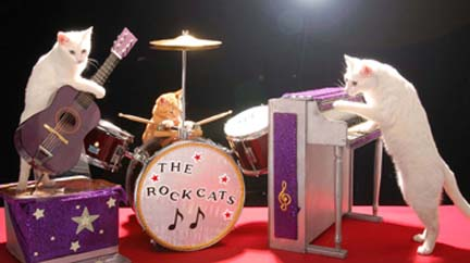 AcroCats7.jpg