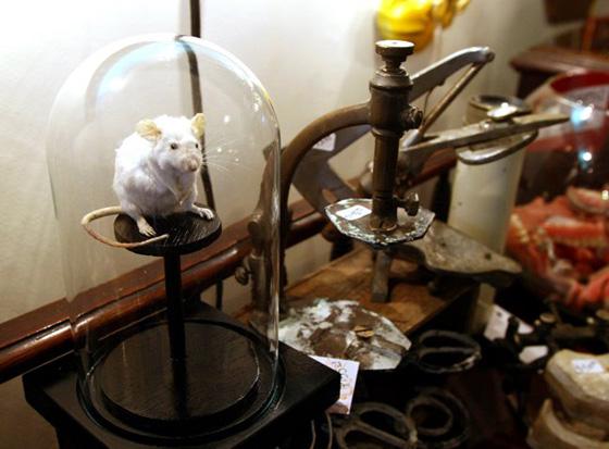 WoollyMammoth_mouse-taxidermy.jpg