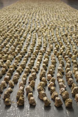 seed bombs