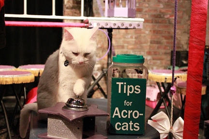 tips for acrocats copy.jpg