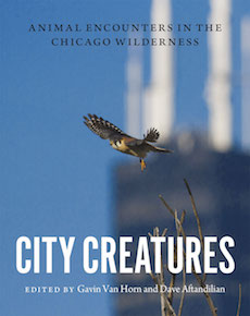 City Creatures cover.jpg