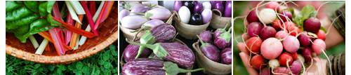 One-Seed-Chicago-Vegetable-Seeds-2011.png