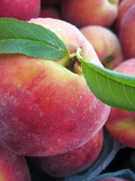 peachsmall.jpg