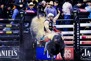 PBR-Bull1.jpg