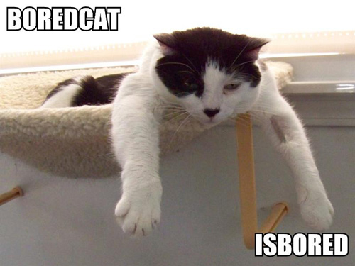 boredcat-isbored.jpg