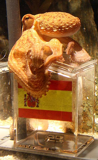 octopusspain.jpg